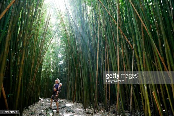 father carrying baby son looking up at tall bamboo - maui - fotografias e filmes do acervo