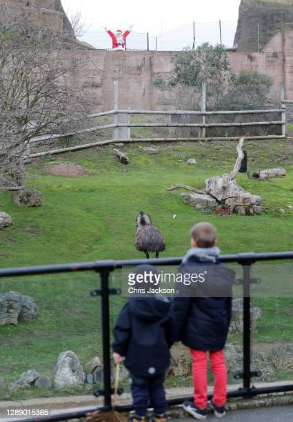 Father Christmas appears in the Emu enclosure as London Zoo reopens as festive wonderland at ZSL London Zoo following UK lockdown on December 02,...