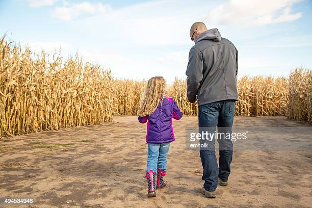 father & daughter walking through autumn corn maze - fall back stock photos and pictures