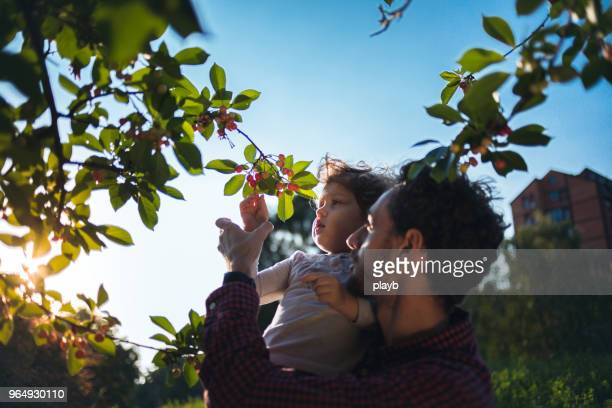 father helping daughter reach fruit - fruit tree stock pictures, royalty-free photos & images