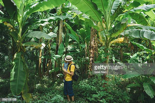 father holding his toddler girl in banana plantation - banana tree stock pictures, royalty-free photos & images