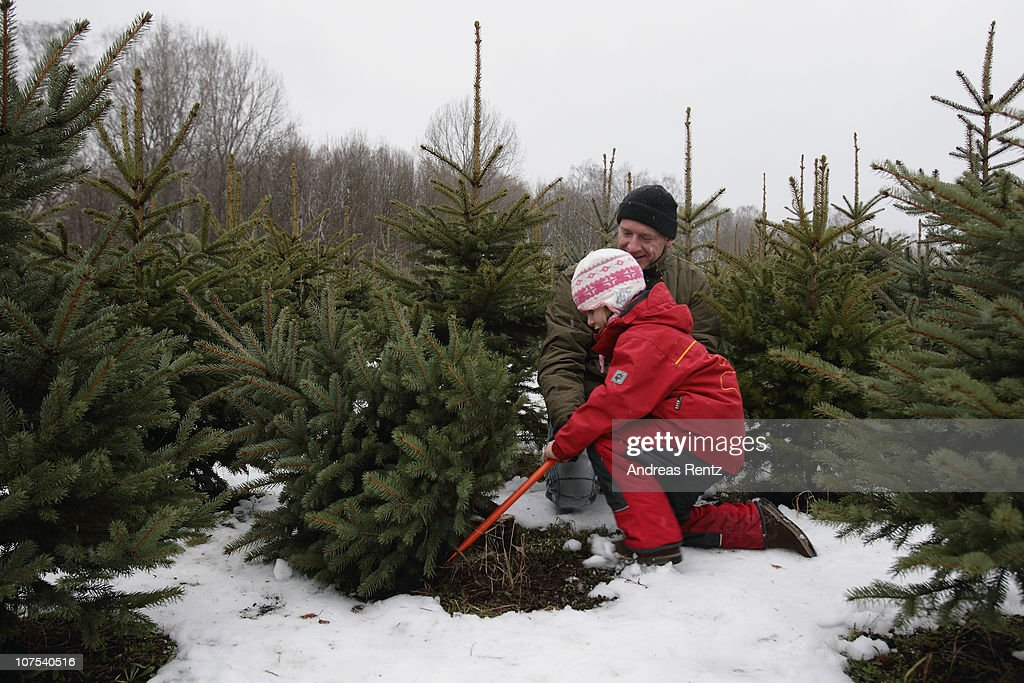 Berlin Citizens Shop For Christmas Trees : News Photo