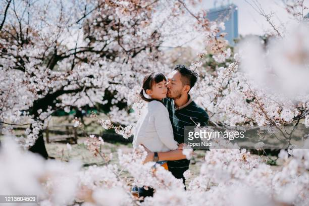 father kissing child, surrounded by cherry blossoms, tokyo, japan - cherry kiss photos et images de collection