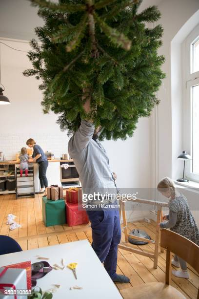 father lifting christmas tree in living room - sapin de noel humour photos et images de collection