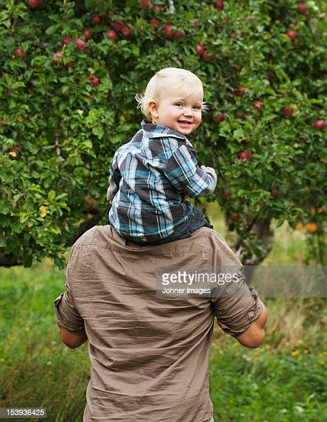 father picking apples with his young son - carrying a person on shoulders stock photos and pictures