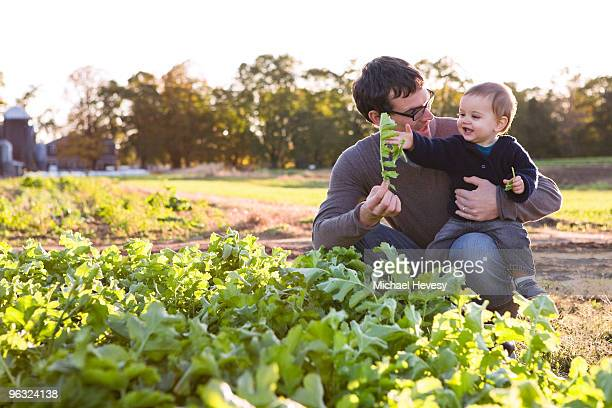 Father Picking Vegetables on the Farm