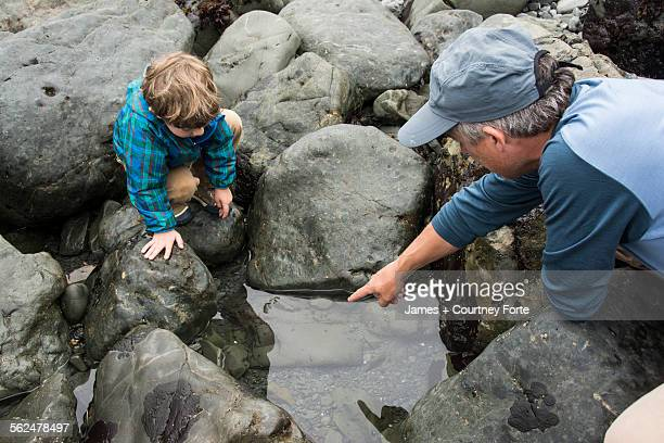 Father points out sea creatures to toddler son in a rocky tidepool at Patricks Point State Park, California.