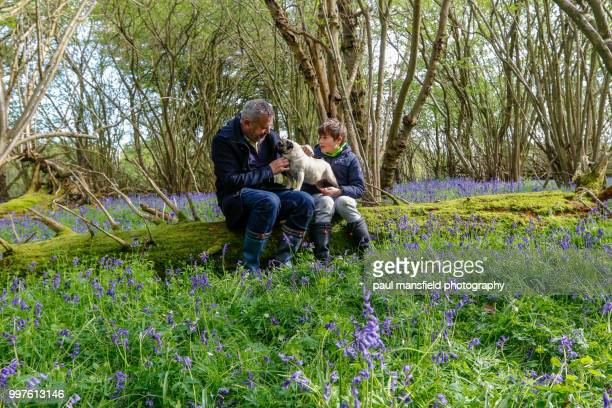 Father, son and pet pug in bluebell wood