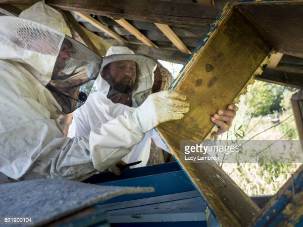 Father & son beekeeping