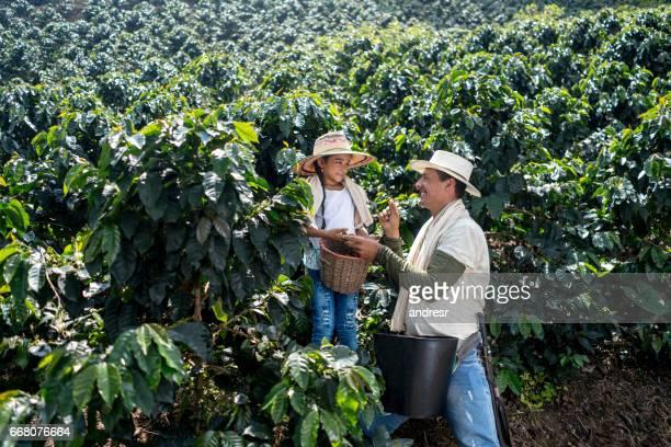 Père enseignant sa fille comment recueillir les grains de café dans une ferme
