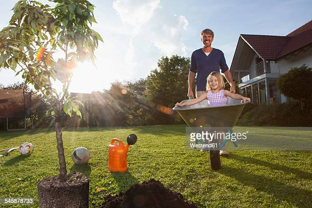 Father with daughter in wheelbarrow planting tree in garden