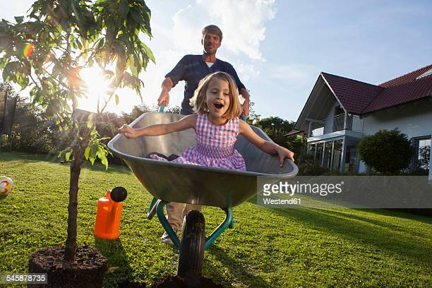 father with daughter in wheelbarrow planting tree in garden - wheelbarrow stock photos and pictures