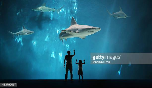 Father with daughter watching sharks in aquarium