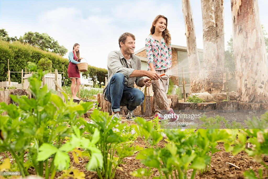 Father with daughter (8-9) watering vegetable garden : Stock-Foto