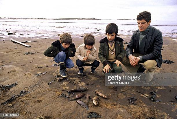 Father with his children looking at oil-soaked and dead fishes due to the sinking of the Amoco Cadiz in Portsall, France in March, 1978.