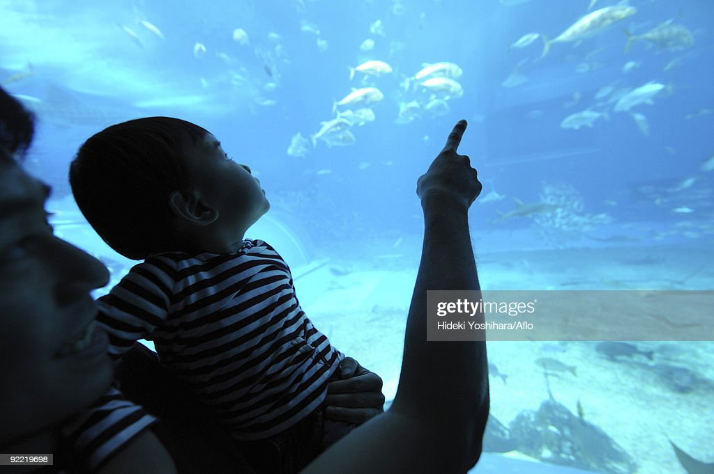 Father with his son watching fish aquarium : Stock Photo