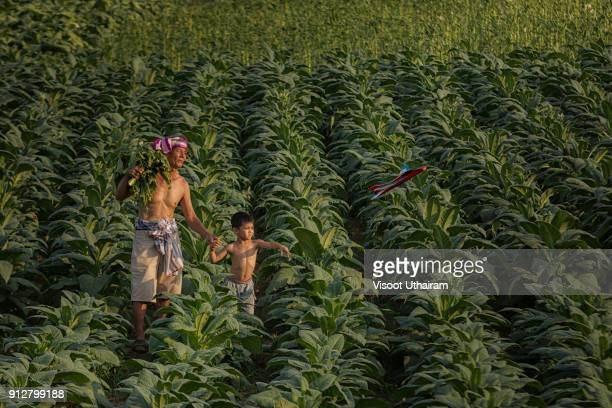 Father with son at the tobacco farm.