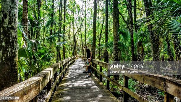 father with son standing on boardwalk amidst trees in forest - sebring stock photos and pictures