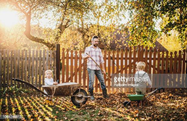 a father with two toddler children raking leaves outdoors in back yard in autumn. - rake stock pictures, royalty-free photos & images