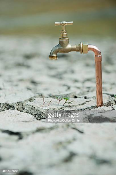 Faucet over seedlings growing in dry, cracked earth