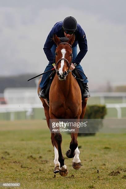 Faugheen on the gallops at Cheltenham racecourse on March 09 2015 in Cheltenham England