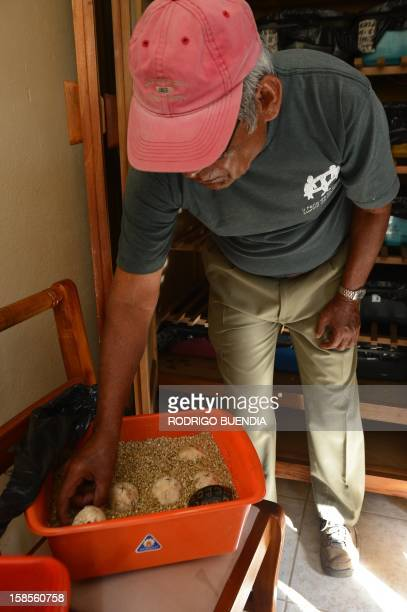 Fausto Llerena in charge of the breeding centre for giant turtles at the Galapagos National Park in Santa Cruz island shows a cage with a tthreeday...