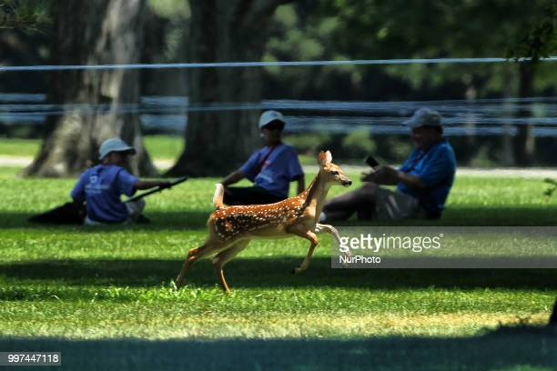 A fawn leaps down the 4th fairway during the first round of the Marathon LPGA Classic golf tournament at Highland Meadows Golf Club in Sylvania Ohio...