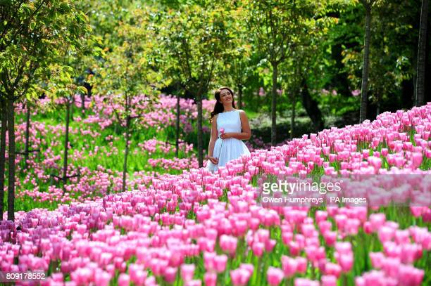 Faye Oughton enjoys the hot weather at the new Pink Mistress Tulip Garden at Alnwick Gardens close to Alnwick Castle