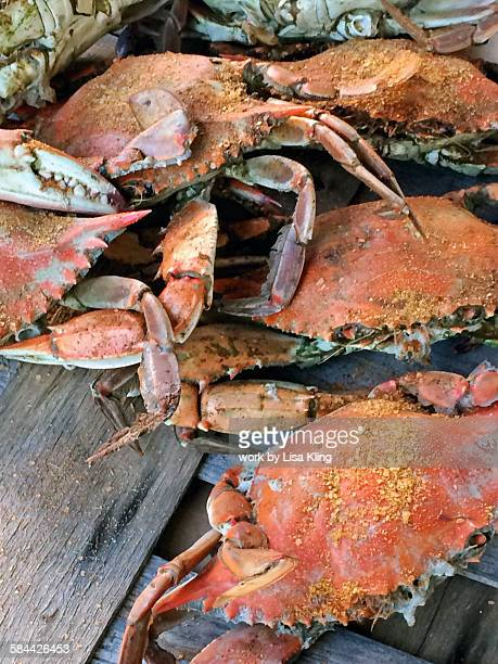 feast of maryland blue crabs - maryland blue crab stock photos and pictures