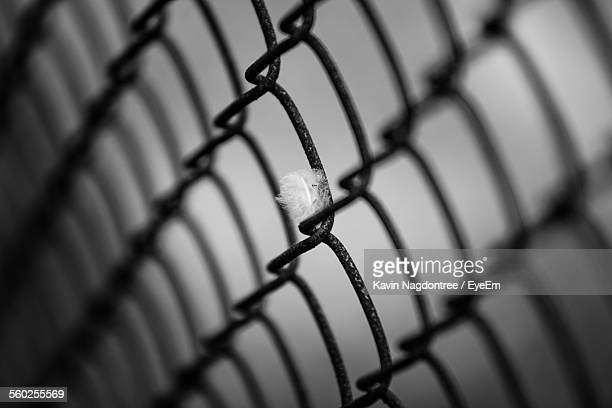 Feather And Chain Link Fence