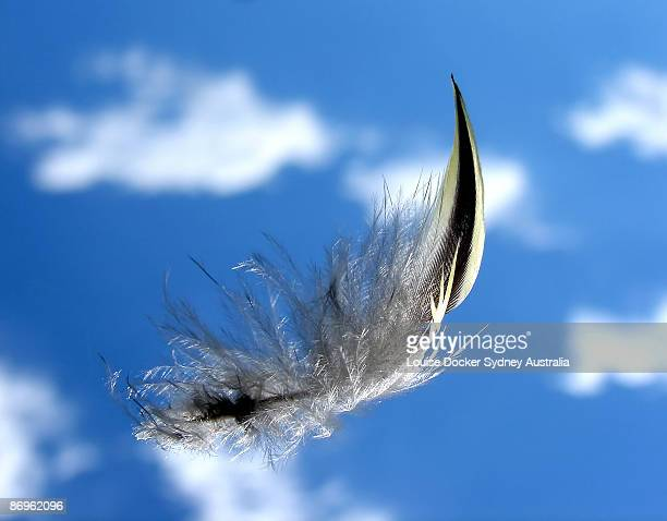 Feather floating in the sky