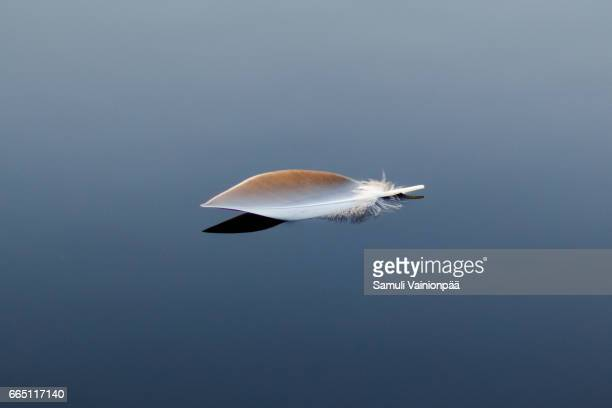Feather Floating On Calm Water