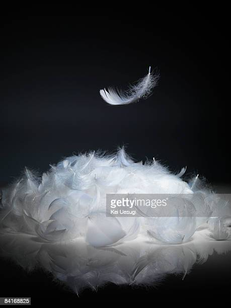 feather in the air - feather stock pictures, royalty-free photos & images