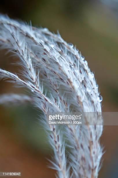 feather like beauty - サルニア ストックフォトと画像