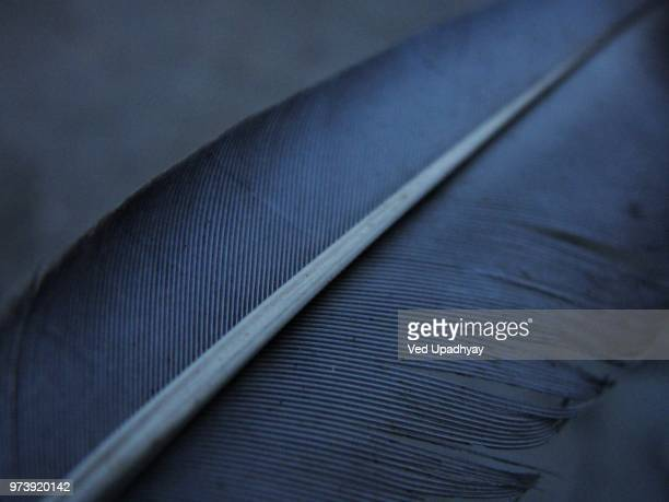 feather lines - feather stock pictures, royalty-free photos & images