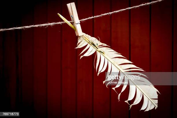Feather on clothes line
