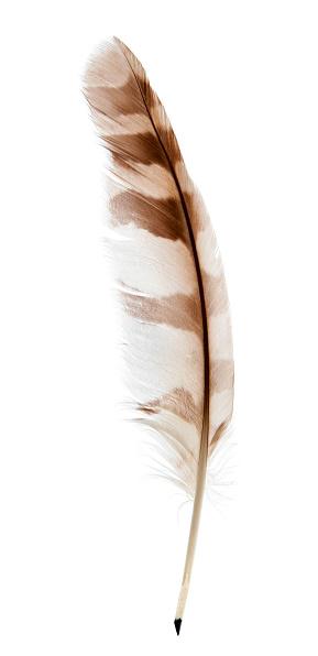 Feather pen on white 494581976