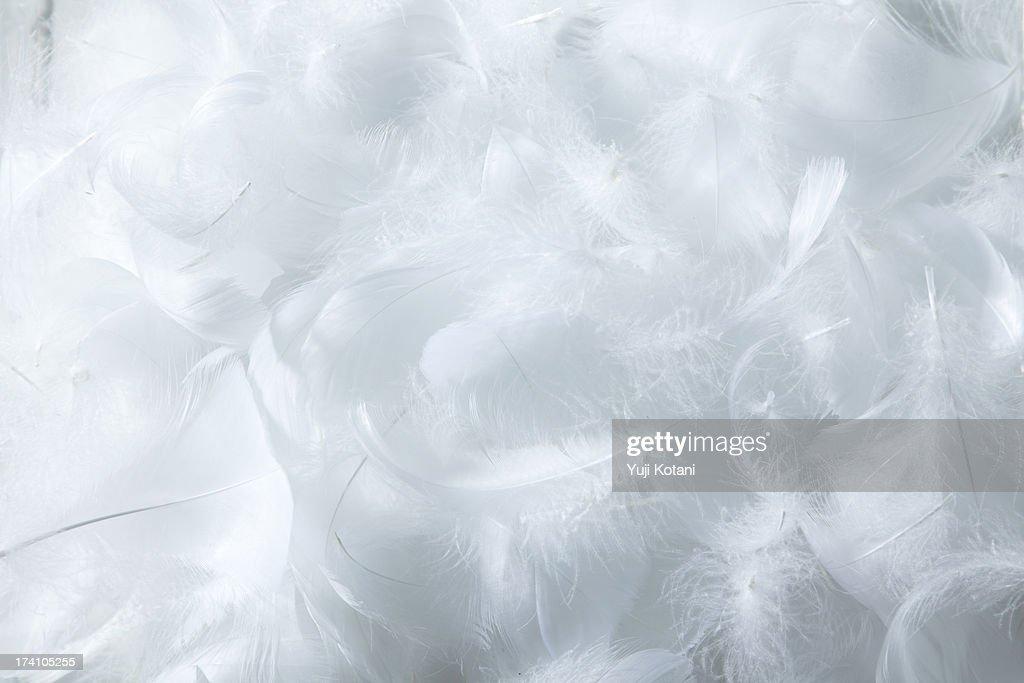 Feather : Stock Photo