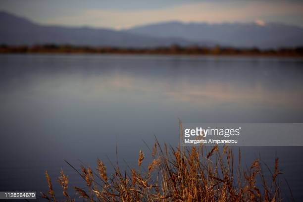 Feather reed grass in focus with a calm lake scene background