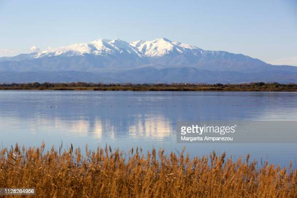 Feather reed grass in the foreground of a calm lake with snowcapped mountains and their reflection in the background