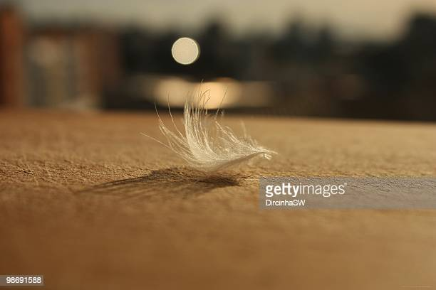 Feather with sunlight