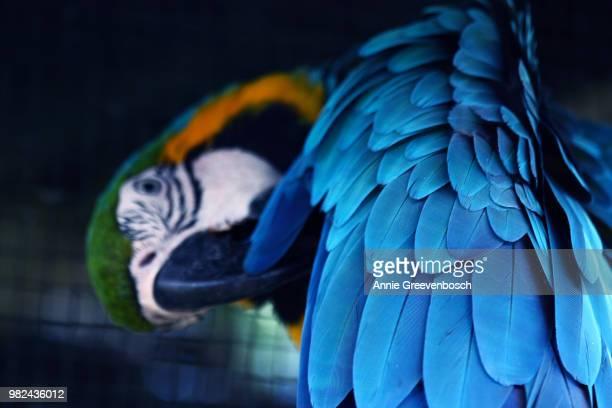 feathered friend - perroquet photos et images de collection