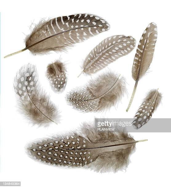 feathers backgrounds - feather stock pictures, royalty-free photos & images