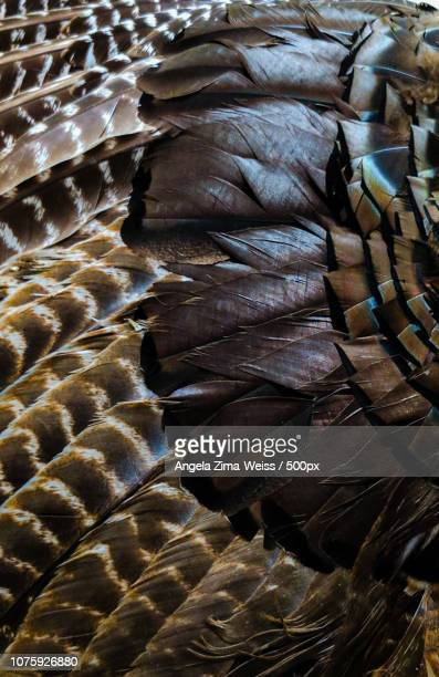 Feathers in Brown