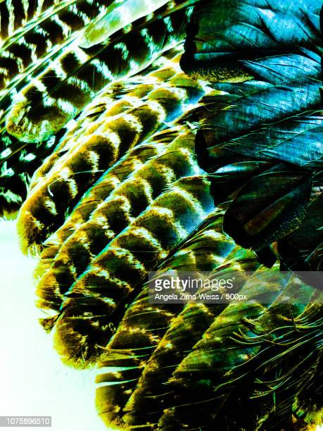 Feathers in Emerald