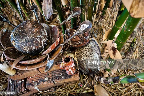 Feathers of a sacrificed chicken are seen at an AfroBrazilian religious altar outside the temple in São João de Manguinhos Bahia Brazil 9 February...