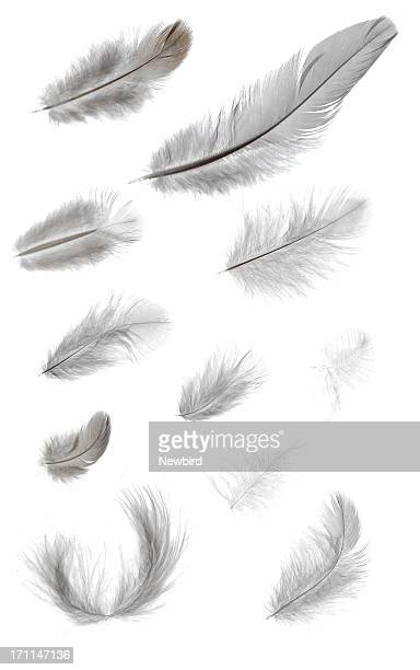 feathers - feather stock pictures, royalty-free photos & images