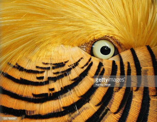 feathery flirt - animal eye stock pictures, royalty-free photos & images