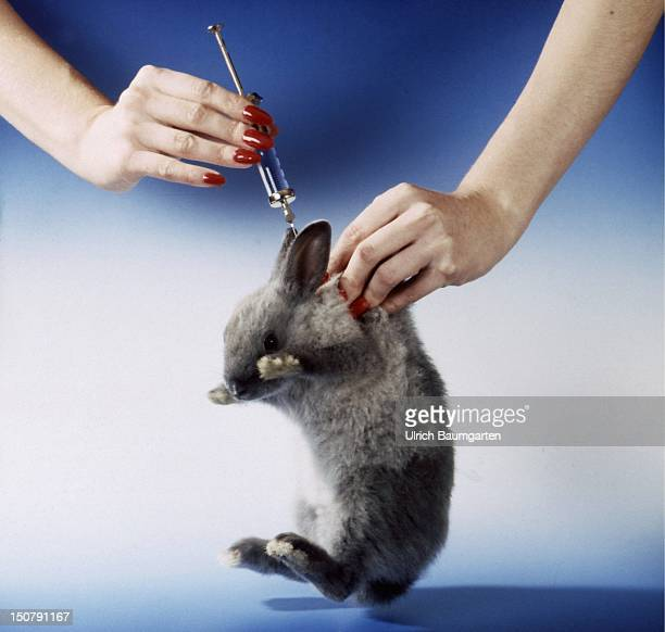 Feature animal experiments A rabbit getting an injection