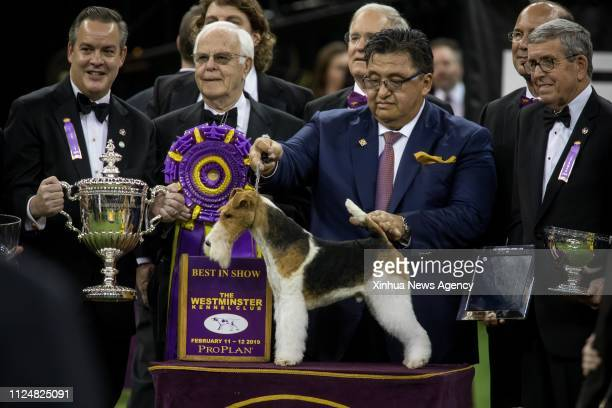 NEW YORK Feb 13 2019 King a wire fox terrier poses with its handler Gabriel Rangel 2nd R and judges after winning 2019 Best In Show adward during the...